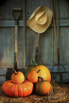 Garden tools in shed with pumpkins