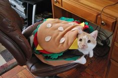 Burger Cat! -- 28 Halloween Costumes For Cats That Will Put A Smile On Your Face