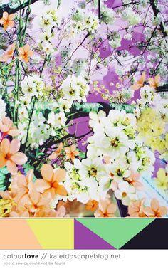 Colour Love // 65 - orange, peach, yellow, purple, green, black, colour, color, palette, flowers - Kaleidoscope Blog