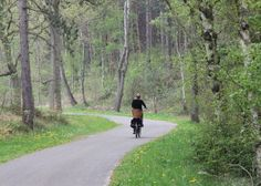 De prachtige bosrijke fietsomgeving in Schoorl