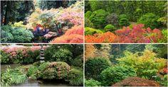 Cada vez más enamorado de los jardines japoneses