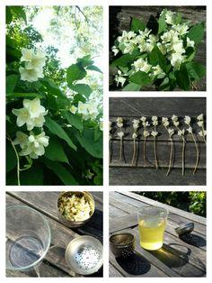 JASMIJN THEE Ingrediënten: - takjes met bloemetjes van de Jasmijn. Voorbereiding: Pluk takjes met bloemetjes. Haal de groene blaadjes er vanaf en hang de takjes te drogen. Als de bloemetjes helemaal gedroogd zijn, kun je van de losse bloemetjes thee maken.