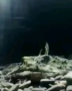 amazing footage ** No copyright infringement intended! 📩 DM me in regards to any questions / concerns / credit / removal! Weird Sea Creatures, Curious Creatures, Ocean Creatures, Cute Creatures, Rare Animals, Animals And Pets, Funny Animals, Animal Consciousness, Life Under The Sea