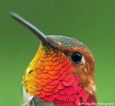 Las Mejores Fotografías del Mundo: Colibries
