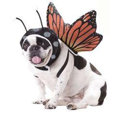 Butterfly Costume - Pet www.budgettravel.com