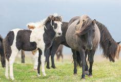 Hvornår skal heste tilrides?
