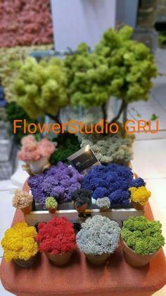 스칸디아모스 대구 대리점 대구 스킨디아모스 주문 스칸디아모스 디자인 및 샘플작업 스칸디아모스 인테리... Moss Wall, How To Preserve Flowers, Preserves, Flower Art, Breakfast, Blog, Bonsai, Terrarium, Decor