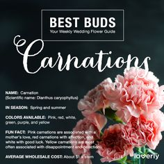 Bouquet Inspiration: Everything you need to know about carnations #wedding #florals