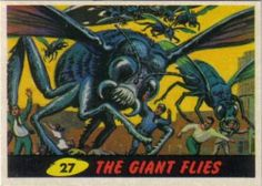 27. The giant flies