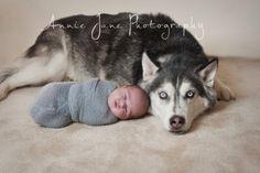 husky dog with newborn