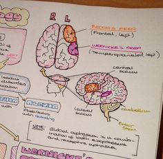 "Sarah Clifford is ""a medical student and a biology tutor with a passion for creating illustrated ..."