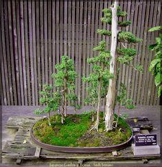 Japanese Garden 9 Bonsai by AndySerrano.deviantart.com on @deviantART
