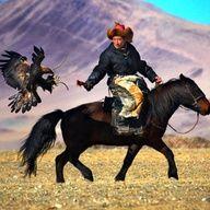 Aguila en Mongolia