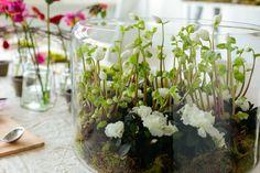 Vous saviez déjà que les plantes étaient idéales pour décorer de votre intérieur. Mais saviez-vous qu'elles sont également de parfaites décorations de Noël ?