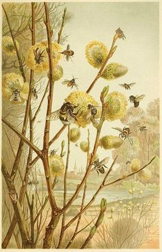Vintage Bee & Beehives - Bee Decor — The Beehive Shoppe Vintage Bee, Art Vintage, Look Vintage, Vintage Paintings, Vintage Quotes, Vintage Ephemera, Vintage Decor, Bee Illustration, Bee Art