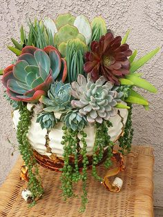 another stunning succulent container garden