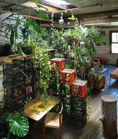 Mathieu Gallois' indoor jungle