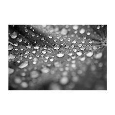 Black and White, Rain Photograph, Fine Art Photography, Botanical... (639.140 IDR) ❤ liked on Polyvore featuring home, home decor, wall art, black and white picture, photographic wall art, rustic wall art, photo wall art and floral wall art