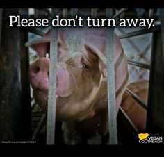 please don't turn away. She feels, she suffers. This is wrong. Say no to exploitation of the vulnerable. Go vegan