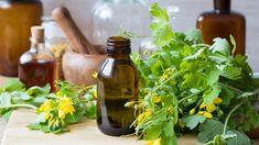 Ošklivé výrůstky na kůži, které mohou překážet abolet anavíc je lze přenést na zbytek rodiny – to jsou bradavice. Proč vznikají ajak se jich co nejdřív zbavit? Gardening, Chemistry, Lawn And Garden, Horticulture