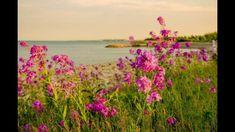 Θυμήσου Flower Landscape, Landscape Art, Flower Wallpaper, Nature Pictures, Wild Flowers, Image Search, Plants, Photography, Painting