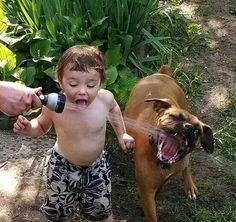 funny dog and child playing