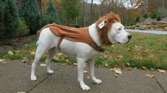 Lion Costume American Bulldog Dog Costume