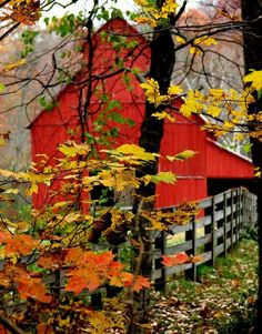 Rustic red barn stands out even with beautiful Fall colors of the leaves. Would you like to live here or just visit? Country Barns, Country Life, Country Living, Country Fall, Country Roads, Red Barns, Autumn Leaves, Autumn Harvest, Harvest Time