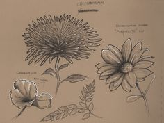 dynamic sketching plants - Google Search