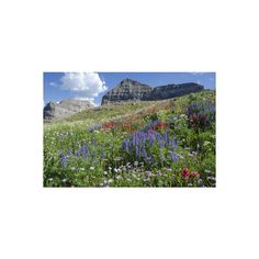 Sticky Aster and Indian Paintbrush, Mt. Timpanogas Wilderness Area... ($28) ❤ liked on Polyvore featuring home, home decor, wall art, entertainment, movies, movies by genre, vintage movies, india wall art, indian paint brush and paint brushes