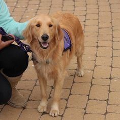 Service Dogs Can Be The Answer For The Disabled