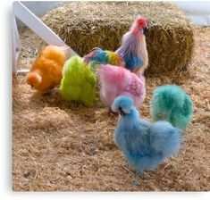 Chicken Coop Ideas, How to Raise Chickens, Egg Stamps, Fresh Eggs Fancy Chickens, Chickens Backyard, Beautiful Chickens, Beautiful Birds, Fluffy Chicken, Bantam Chickens, Frizzle Chickens, Diy Chicken Coop Plans, Chicken Runs
