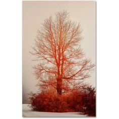 Trademark Fine Art On Fire in the Fog Canvas Art by Lois Bryan, Size: 16 x 24, Multicolor