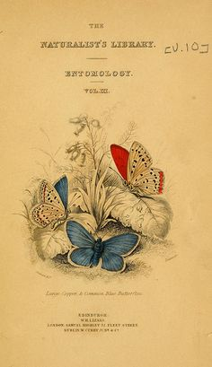 The Naturalist's Library of Entomology, 1840