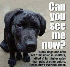 Black dogs and cats are killed at higher rates than pets of other colors. Please don't overlook them!