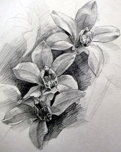 Flower pencil drawing is actually a basic step which helps you understand drawing methods. Description from fineartblogger.com. I searched for this on bing.com/images