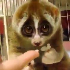 Animals need us every day - Animals wild, Animals cutest, Animals funny, Animals drawings Cute Little Animals, Cute Funny Animals, Cute Dogs, Cute Animal Videos, Cute Animal Pictures, Animal Fun, Animal Antics, Pet Day, Cute Creatures
