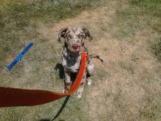 Available in Waukesha, WI -- needs a new home!