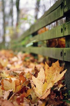 """""""Come, little leaves, said the wind one day. Come down to the meadow and we shall play. Put on your dresses of red and gold, for summer is past and the days grow cold."""" - George Cooper"""