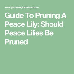 Guide To Pruning A Peace Lily: Should Peace Lilies Be Pruned