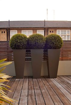 Boxwood In A Tall Planter Re Create This By Using Artificial