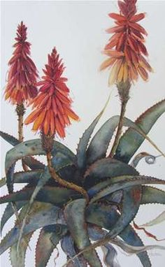 The Artists | Elizabeth Gordon Gallery Protea Art, Watercolor Artists, Watercolor Flowers, Watercolor Ideas, Watercolor Paintings, Art Floral, Flower Images, Flower Art, Lino Art