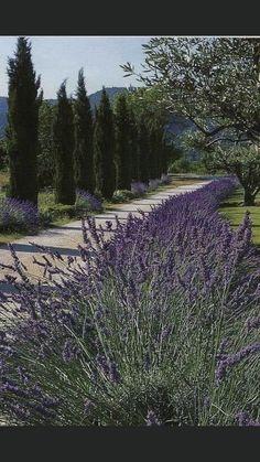 Landscape Designs, Garden Landscape Design, Beautiful Castles, Beautiful Gardens, Beautiful Flowers, Van Gogh, Provence Garden, Provence France, Driveway Landscaping