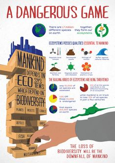 relationship biodiversity ecosystem infographic - Google Search