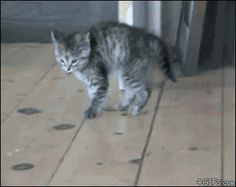 Is this a new dance craze among our feline friends? Come on everybody, do the kitty bounce!