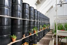 Have you heard of aquaponics? Aquaponics Combines the Growing of Fish and Plants You may grow plants in water and without soil and once one does this together with growing fish you are practicing aquaponics. Greenhouse Effect, Build A Greenhouse, Greenhouse Ideas, Greenhouse Wedding, Greenhouse Heaters, Outdoor Greenhouse, Greenhouse Gardening, Greenhouse Gases, Aquaponics System