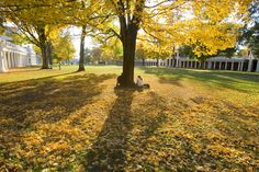 The Lawn at UVA.  I go to the best school in the world.