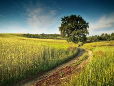 By Jacek Ksiazek. Beautiful World, Beautiful Places, Country Life, Country Roads, Landscape Pics, Forest Road, I Want To Travel, Amazing Adventures, Bose