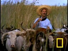 Cool video from National Geographic, we are definitely thankful for all of the hard work our gauchos put forth!
