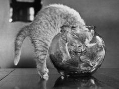 kittens-in-a-fish-bowl